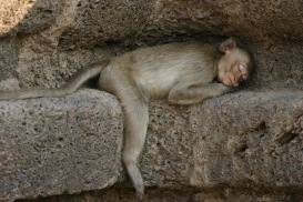 A monkey in Lopburi, Thailand
